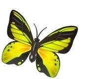 Illustrazione gialla della farfalla Fotografie Stock