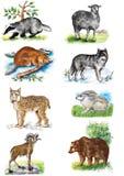 Illustrazione Gli animali sopportano Pecore lupo lepri lynx tasso ram castoro immagini stock