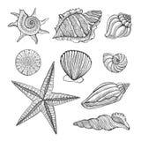 Illustrazione grafica d'annata disegnata a mano con le conchiglie realistiche Elementi marini per il menu di progettazione, ricet illustrazione vettoriale