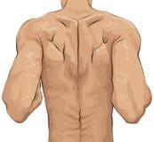 Illustrazione imprecisa della parte posteriore dell'uomo Immagini Stock