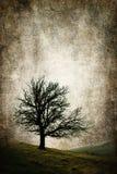 Illustrazione isolata di concetto dell'annata dell'albero Fotografie Stock