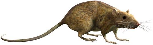 Illustrazione isolata roditore di Peest del ratto Fotografia Stock