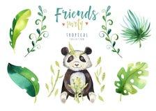 Illustrazione isolata scuola materna degli animali del bambino per i bambini Disegno tropicale di boho dell'acquerello, punda tro Fotografie Stock