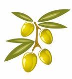 Illustrazione isolata simbolo stilizzato delle olive Immagini Stock Libere da Diritti