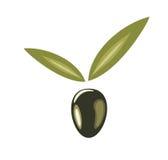 Illustrazione isolata simbolo verde oliva stilizzato Fotografia Stock
