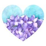 Illustrazione lilla di amore del cuore della natura dell'ortensia floreale del fiore dell'acquerello isolata Fotografia Stock