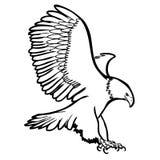Illustrazione a mano libera di schizzo dell'aquila, uccello del falco Fotografia Stock Libera da Diritti