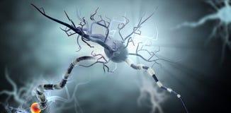 Illustrazione medica, cellule nervose royalty illustrazione gratis