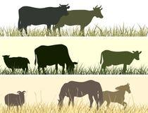 Illustrazione orizzontale degli animali domestici dell'azienda agricola. illustrazione di stock