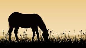 Illustrazione orizzontale del cavallo che pasce. Fotografie Stock