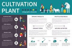 Illustrazione piana infographic di vettore di coltivazione delle piante Concetto di presentazione Immagine Stock Libera da Diritti
