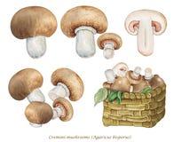 Illustrazione realistica dei funghi di Cremini, agaricus bisporus dei funghi del fungo prataiolo royalty illustrazione gratis