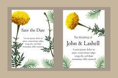 Illustrazione realistica di vettore del fiore del tagete sulla carta dell'invito fotografie stock