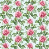 Illustrazione rosa dell'acquerello Fotografia Stock