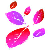 Illustrazione rosa e rossa di clipart delle foglie cadenti Fotografie Stock