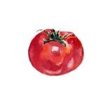 Illustrazione rossa dell'alimento dell'acquerello del pomodoro Fotografia Stock Libera da Diritti