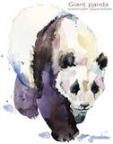 Illustrazione selvaggia dell'acquerello di tiraggio della mano del panda royalty illustrazione gratis