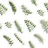 Illustrazione senza cuciture del fondo del modello delle erbe selvagge e dei ramoscelli royalty illustrazione gratis