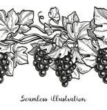 Illustrazione senza cuciture dell'uva Fotografia Stock Libera da Diritti