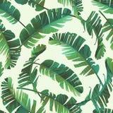 Illustrazione senza cuciture delle foglie tropicali, giungla dell'acquerello Fotografia Stock