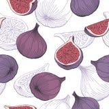 Illustrazione senza cuciture di schizzo del modello di colore grafico della frutta del fico Immagine Stock