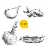 Illustrazione stabilita di stile disegnato a mano di schizzo delle spezie differenti Chiodo di garofano di aglio, radice dello ze Fotografie Stock