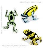 Illustrazione stabilita 2 di vettore del fumetto della rana della rana del dardo del veleno della rana illustrazione vettoriale