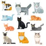 Illustrazione stabilita sveglia di vettore dell'animale domestico del manifesto delle razze del gatto Fotografia Stock