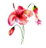 Illustrazione stilizzata dell'acquerello dei fiori Immagine Stock