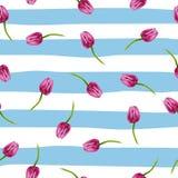Illustrazione a strisce del fondo con l'illustrazione delle bande blu con le bande blu ed i tulipani del pinl Immagini Stock Libere da Diritti