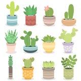 Illustrazione succulente di vettore della pianta tropicale di verde della natura del cactus Fotografie Stock