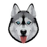 Illustrazione sveglia del husky Fotografia Stock Libera da Diritti