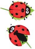 Illustrazione sveglia del ladybug Fotografia Stock