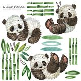 Illustrazione sveglia dell'acquerello del panda del fumetto illustrazione di stock