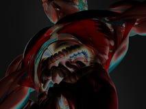 Illustrazione termica 3D di anatomia umana con i testines di I Fotografia Stock Libera da Diritti