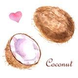 Illustrazione tropicale dell'acquerello con la noce di cocco su un fondo bianco illustrazione vettoriale