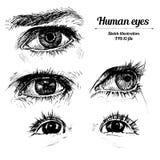 Illustrazione umana di schizzo delle mani Fotografie Stock