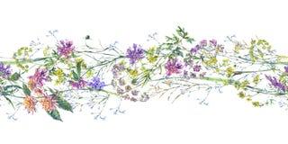 Illustrazione variopinta botanica del confine senza cuciture dei wildflowers di estate dell'acquerello immagini stock libere da diritti