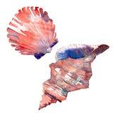 Illustrazione variopinta della mano dell'acquerello di due conchiglie della bella spiaggia marina fresca meravigliosa adorabile g Fotografia Stock Libera da Diritti