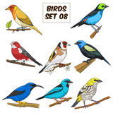 Illustrazione variopinta di vettore del fumetto stabilito dell'uccello Fotografie Stock Libere da Diritti
