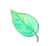 Illustrazione verde del foglio Immagine Stock
