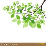Illustrazione verde di vettore dell'albero del foglio Immagini Stock Libere da Diritti