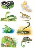 Illustrazioni degli animali Vipera, boa, serpente, lucertola, rana, anaconda, tritone, camaleonte fotografie stock