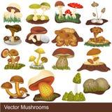Illustrazioni del fungo Fotografia Stock Libera da Diritti