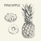 Illustrazioni disegnate a mano degli ananas Disegni esotici di vettore della frutta tropicale isolati su fondo bianco illustrazione vettoriale
