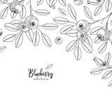Illustrazioni disegnate a mano del mirtillo isolate su fondo bianco Struttura dettagliata con i mirtilli Styl dell'annata di schi illustrazione di stock