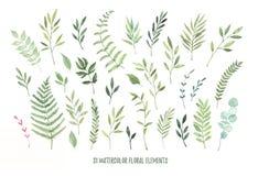 Illustrazioni disegnate a mano dell'acquerello Allori botanici di clipart