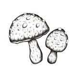 illustrazioni disegnate a mano dell'insieme dei funghi Immagini Stock