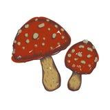 illustrazioni disegnate a mano dell'insieme dei funghi Immagine Stock