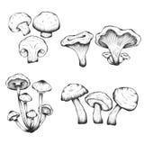 Illustrazioni disegnate a mano di vettore dell'insieme dei funghi Immagine Stock Libera da Diritti